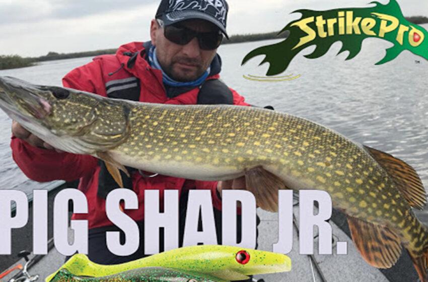 Pescuit la stiuca in Delta Dunarii cu Strike Pro Pig Shad!