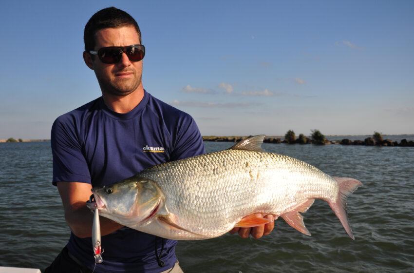 ABC pescuit la avat pe Dunare, naluci, ponturi, povesti si pescari mai buni ca mine!