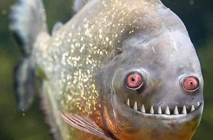 Atenţie! A început perioada de prohibiţie generală la pescuit în 2021.